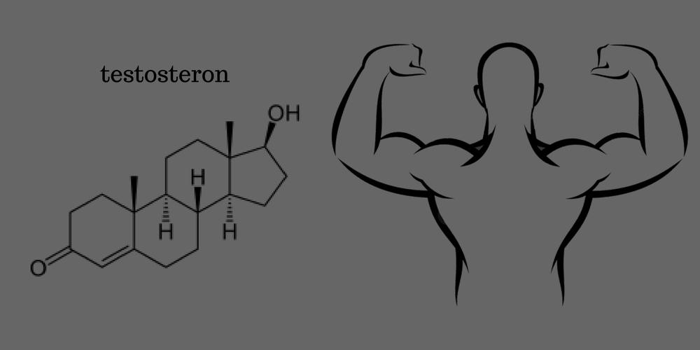 chemische-samenstelling-testosteron