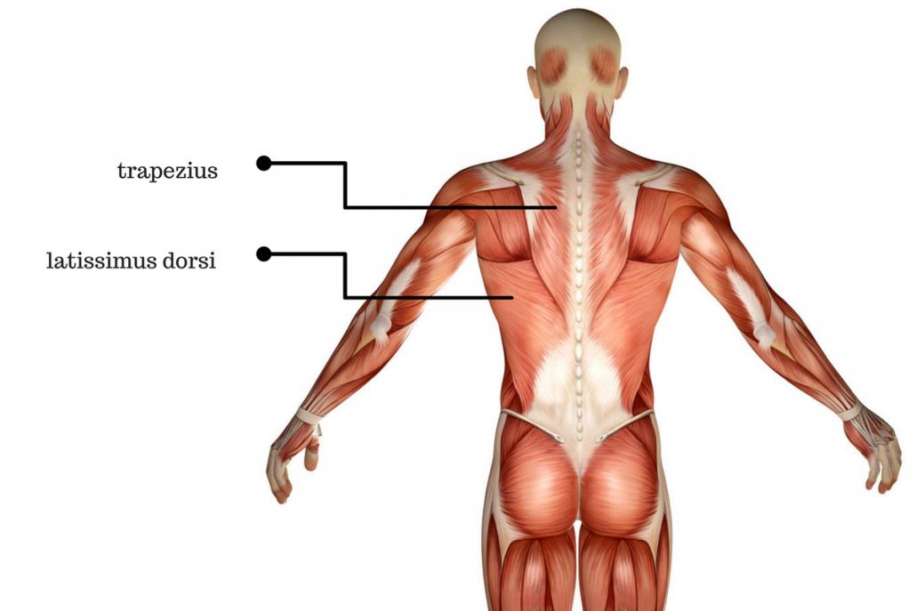 anatomie-van-de-rug