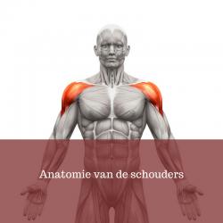 anatomie-van-schouders
