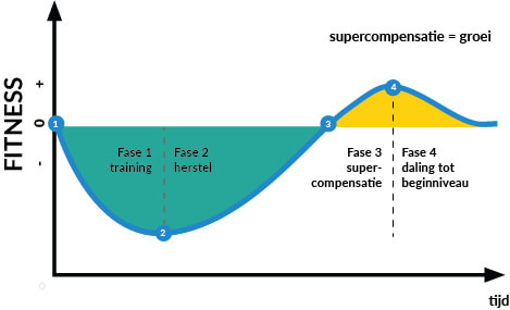 grafiek die uitlegt wat supercompensatie is